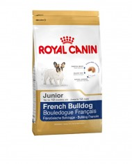 Fench Bulldog junior