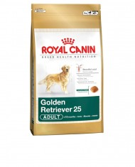 Golden retriever 25 Adult