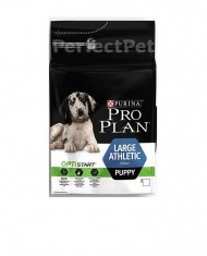 Puppy large breed athletic