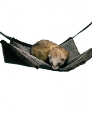 Cama 2 In 1 Hanging Tunnel & Hammock