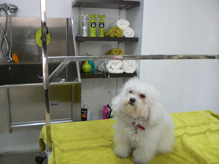 Kelly Pet Spa4