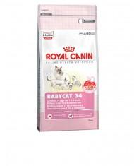 Babycat 34